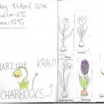 Naturtagebuch April I